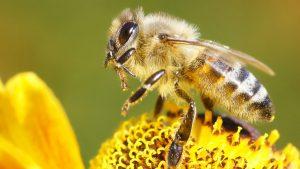 Eco Friendly Bee Control