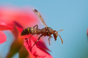Fort Worth Paper Wasp