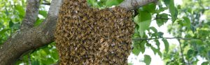 bee hive removal houston