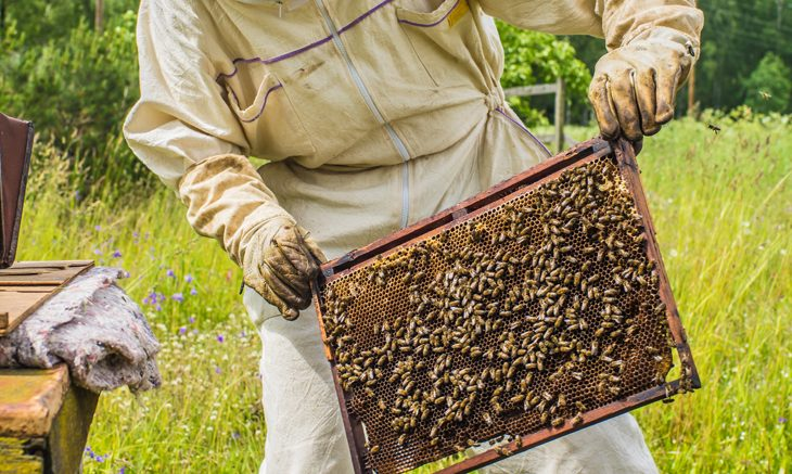Why The Decline of Bees in California is Problematic
