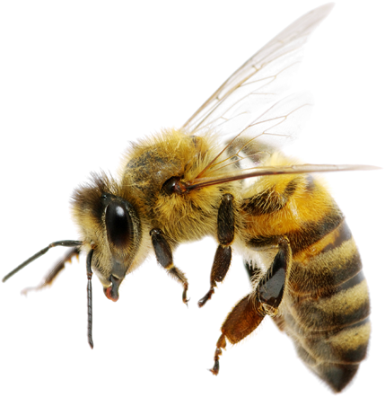 big bee control services