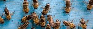 local bee keepers in houston