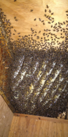 Bee Hive Houston
