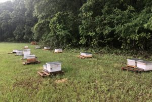 Dallas bee apiary