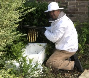 Fort Worth Bee hive removal from water shut off valve box