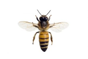 Bee Removal in Houston. Wasp Removal in Houston