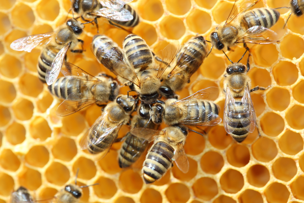 Bee Hive Removal Services