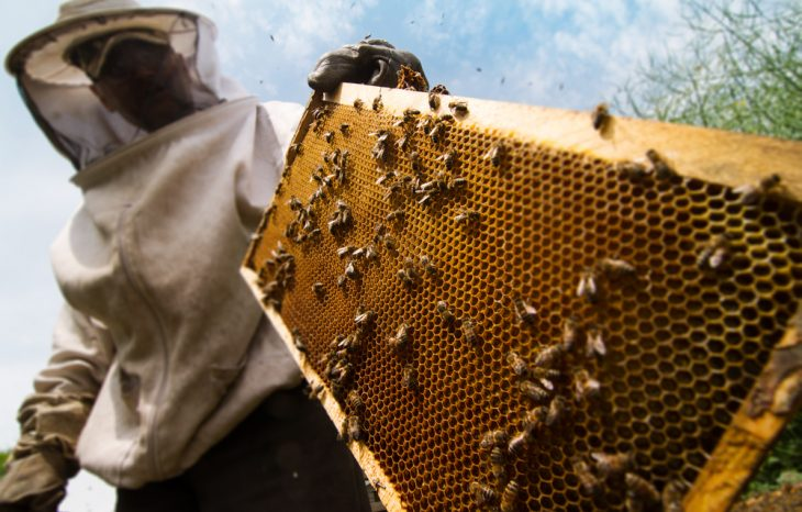 5 Leading Benefits of Beekeeping