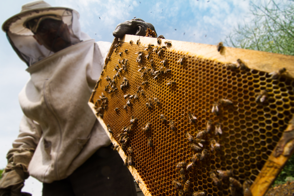 Beekeeping in Dallas