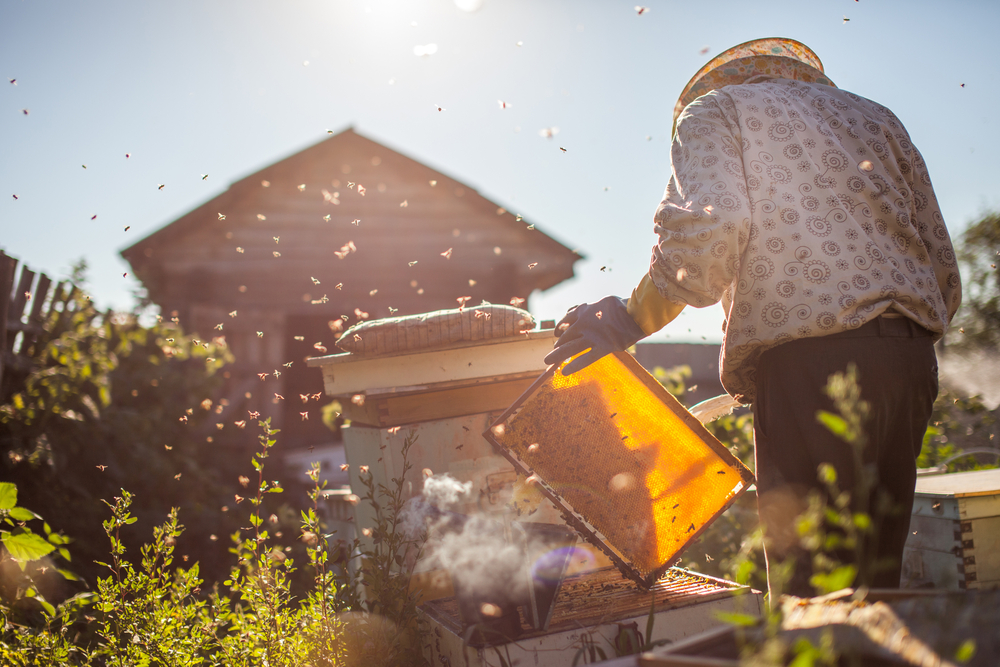 A Look Inside the Beekeeping Process