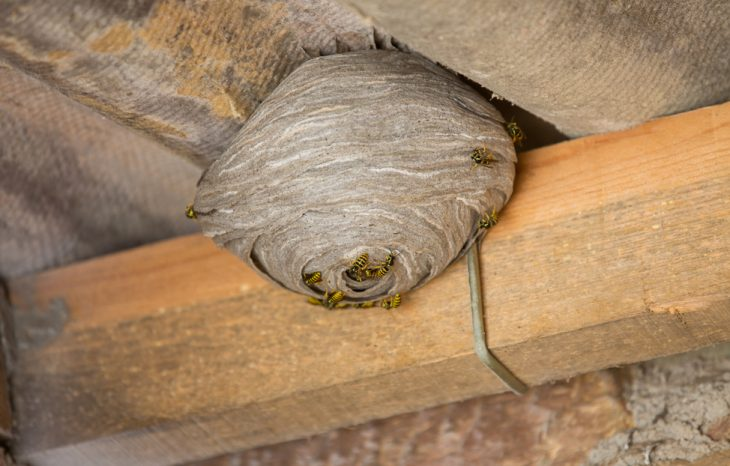 Common Locations for Wasp Nests at Your Home or Business