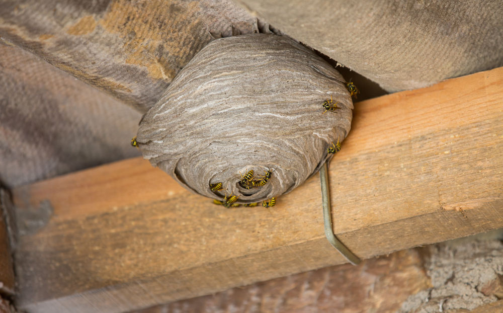 Common Locations for Wasp Nests | Wasp Exterminator DFW ...