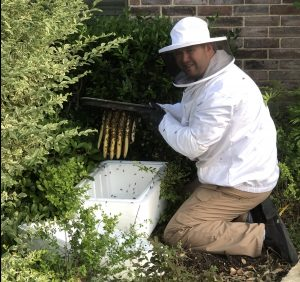 Austin Bee Removal, Yellow Jacket and Wasp control
