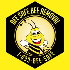 bee removal wasp removal