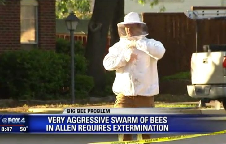 Killer Bee Removal in Allen – Featured on FOX4 News
