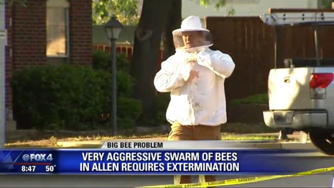 Killer Bees in Allen, TX - Fox 4 News