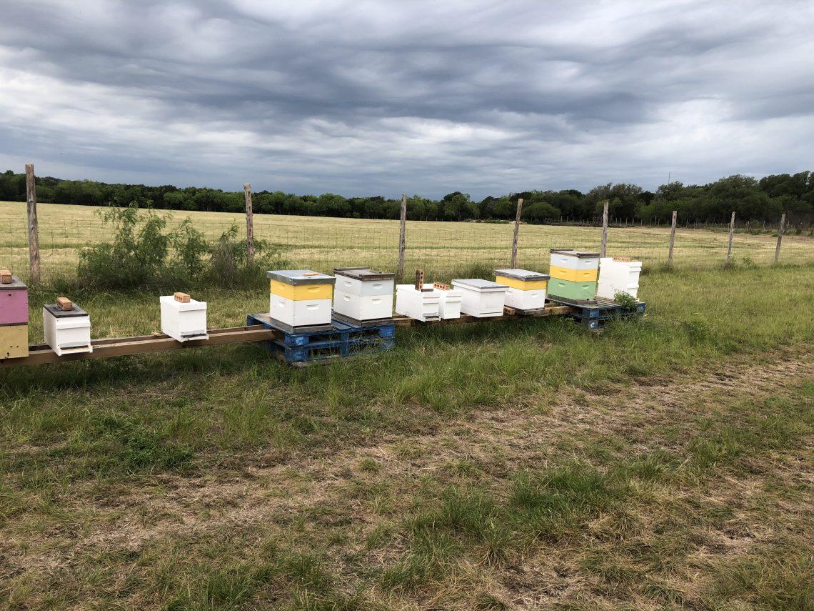 San Antonio Beekeeper Bee Yard