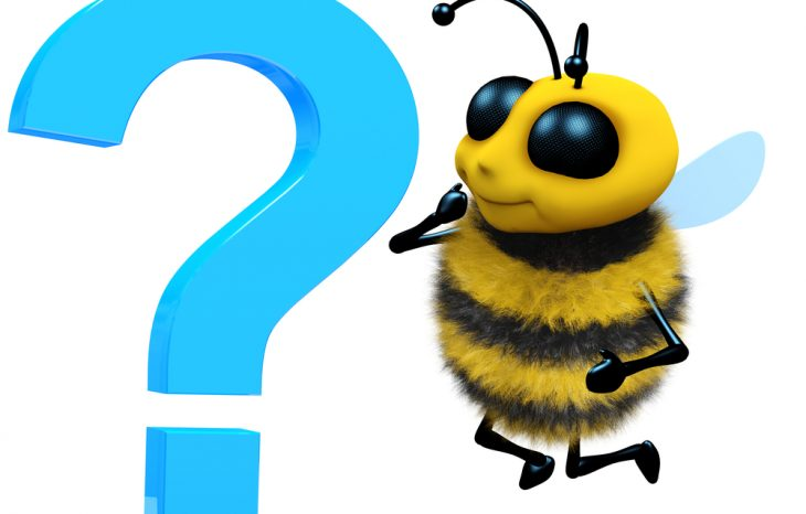 Questions to Ask Before Hiring a Bee Removal Company