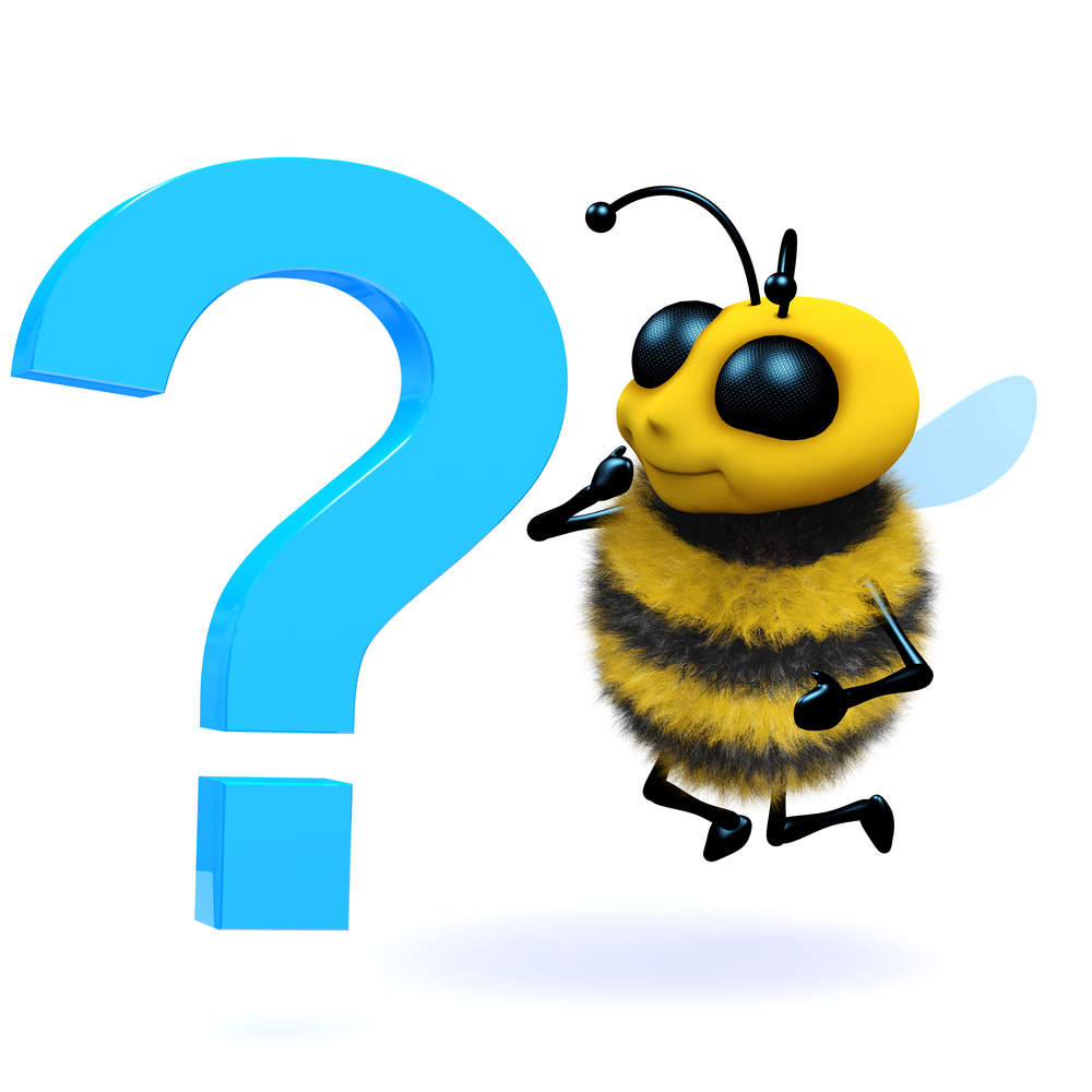 Questsions to Ask Bee Removal Company