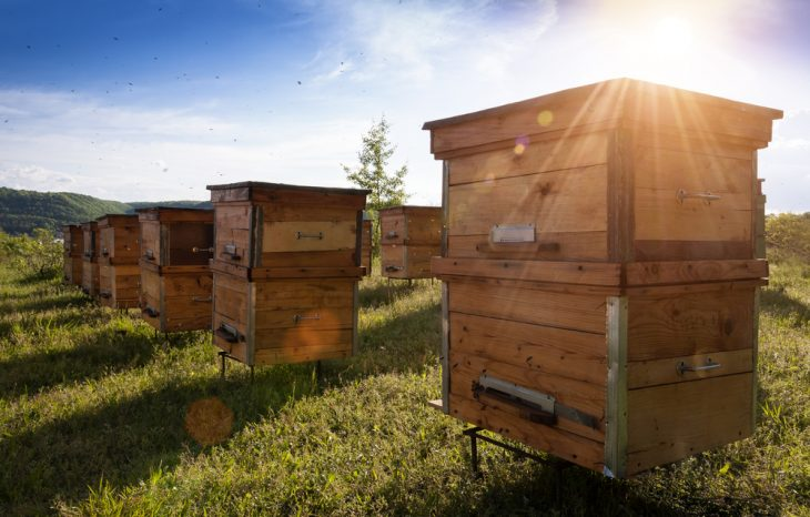 Bee Apiary 101: Life of a Beekeeper