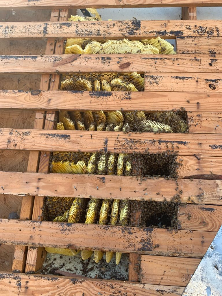 Allen Live Bee Hive to be Removed