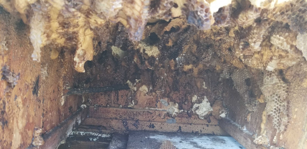 Dry Hive in Frisco, Texas