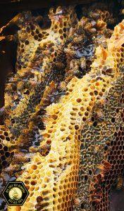 Dallas Texas honeycomb closeup