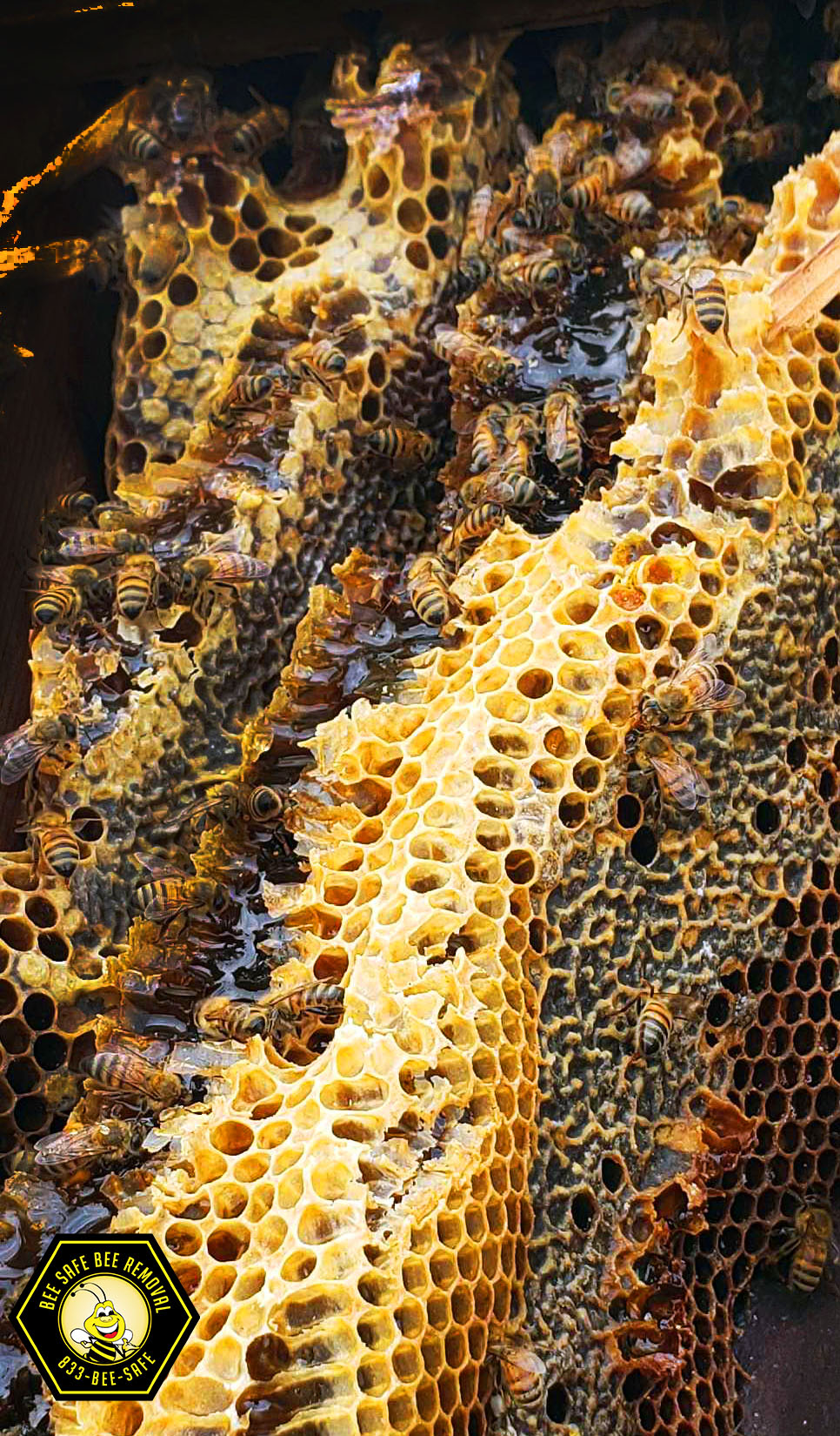 Dallas Texas honeycomb closeup