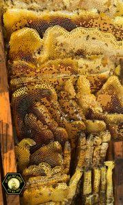 how bees nest in Allen