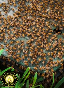 bee removal from the backyard in Highland Park