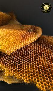 bee honey comb in Allen
