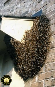 Bees and Wasps on a Soffit in Frisco