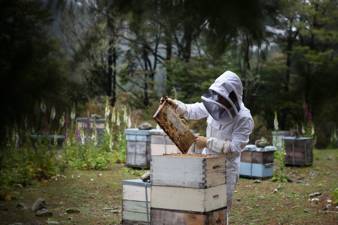Professional Beekeeper preventing bee infestations