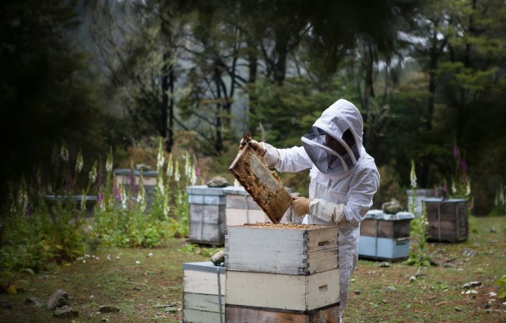What do you do when have a bee hive in your home? Hire a reputable, professional beekeeper.