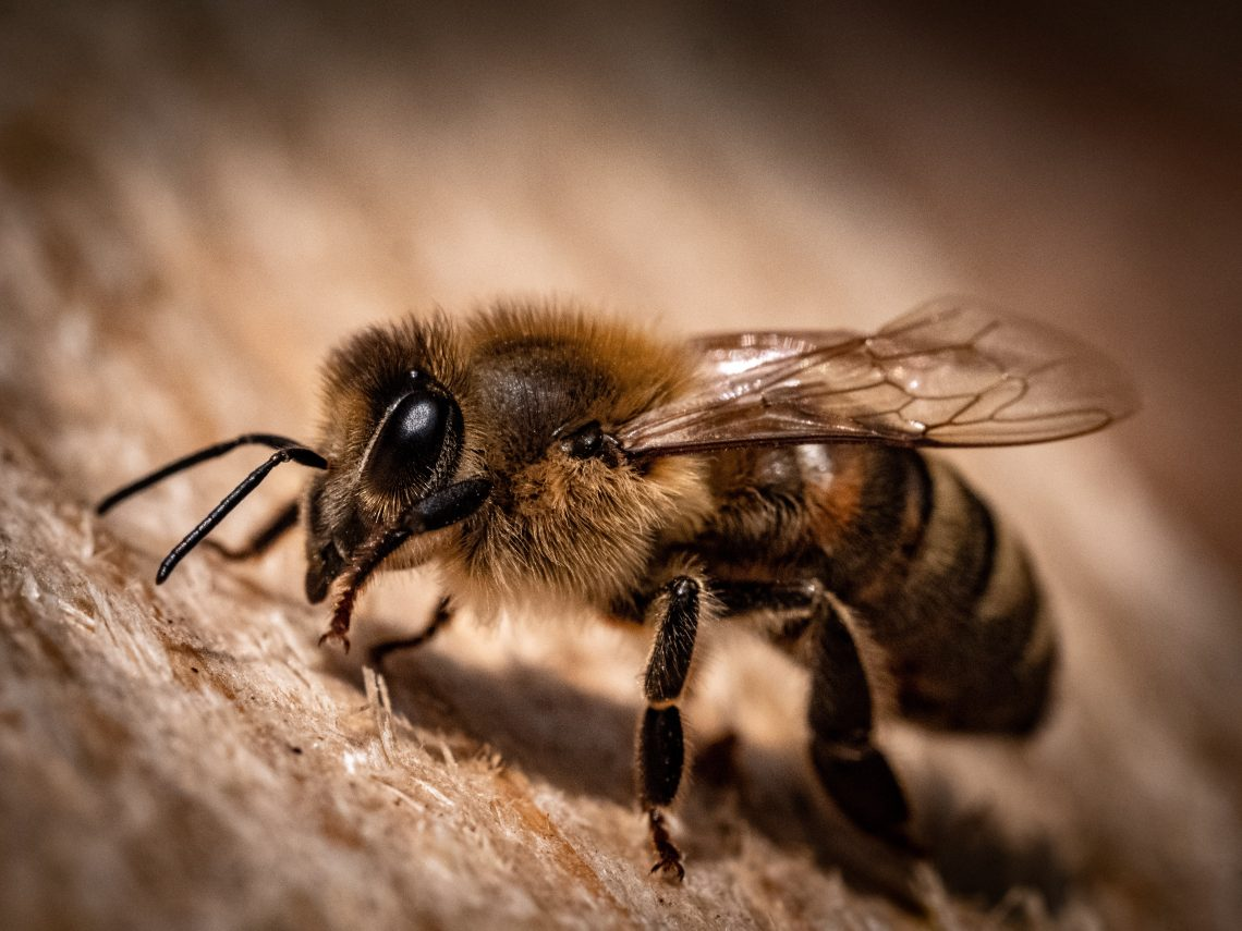 What is the price of bee removal?