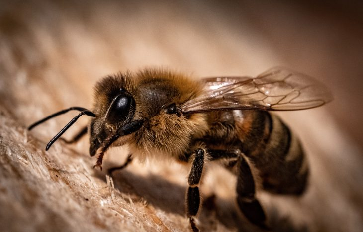 How much does it cost to have bees removed?