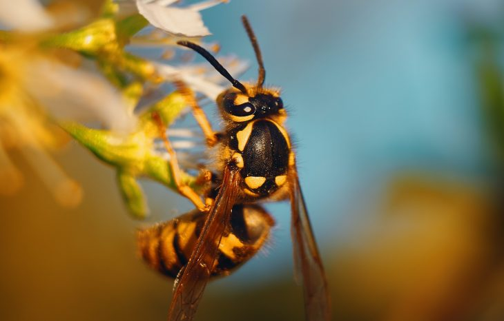 The Benefits of Wasps