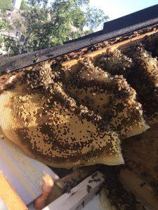 Bee Renoval on Brutton CT Dallas TX