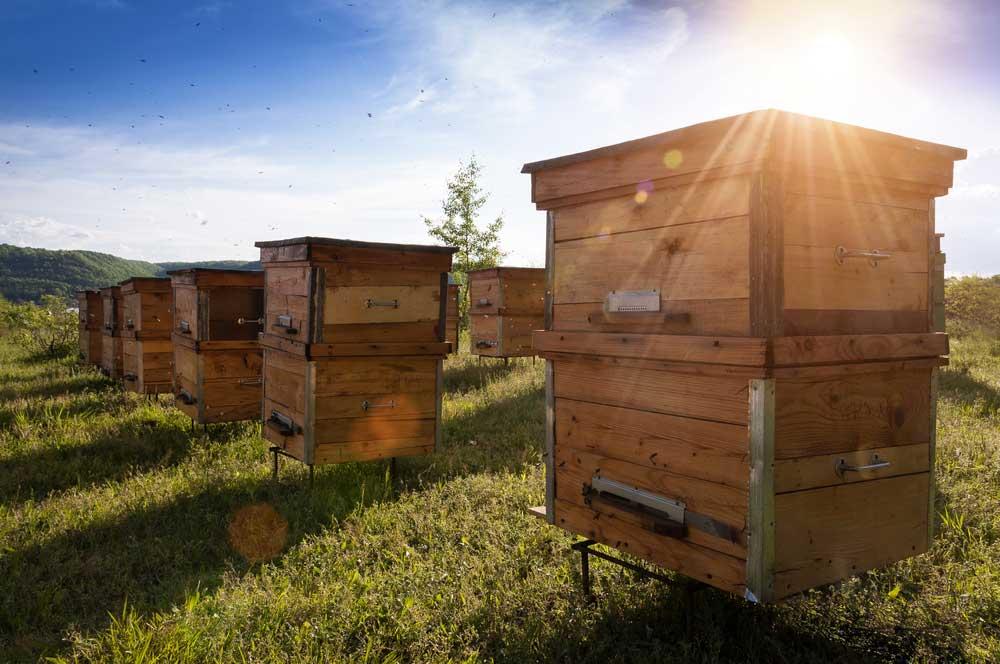 Texas Bee Apiary