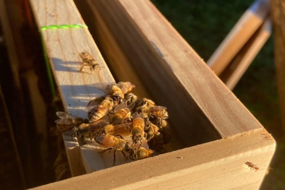 Bee in danger
