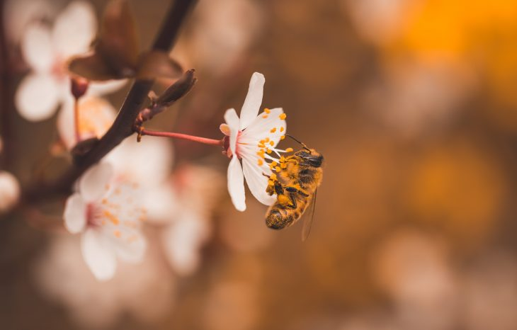 How Pollination is Important to Bees