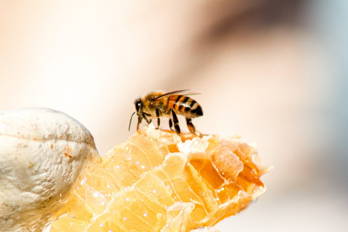 how is honey made by bees